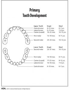 When Should My Child Get Baby Teeth? | Vac Orthodontics